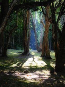 68. Dschungel (Thailand)