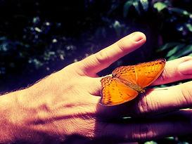 Butterfly4_klein.jpg