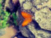 ButterflyStone.jpg