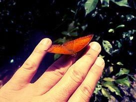 Butterfly2_klein.jpg