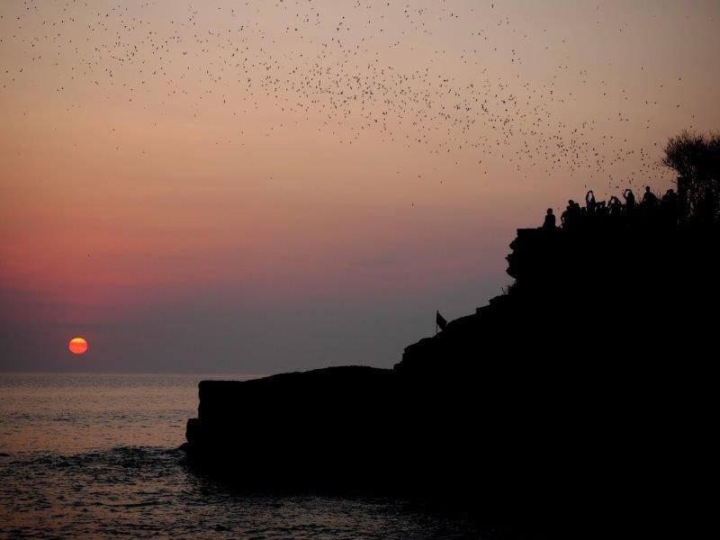 55. Fledermäuse am Abend (Bali)