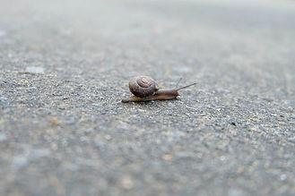 snail-3393736_1920.jpg