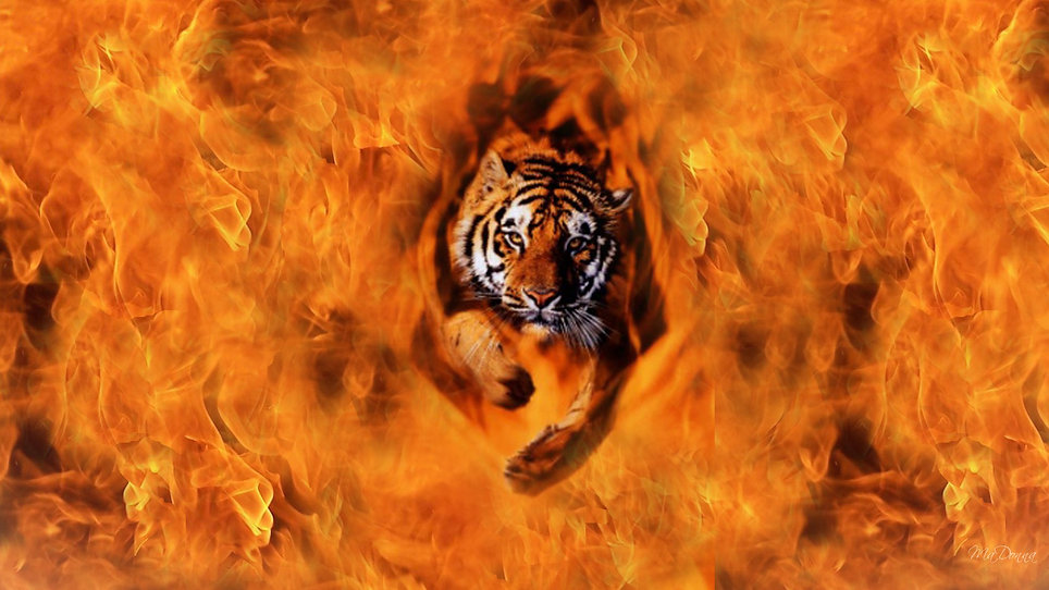 tiger-from-the-flames.jpg