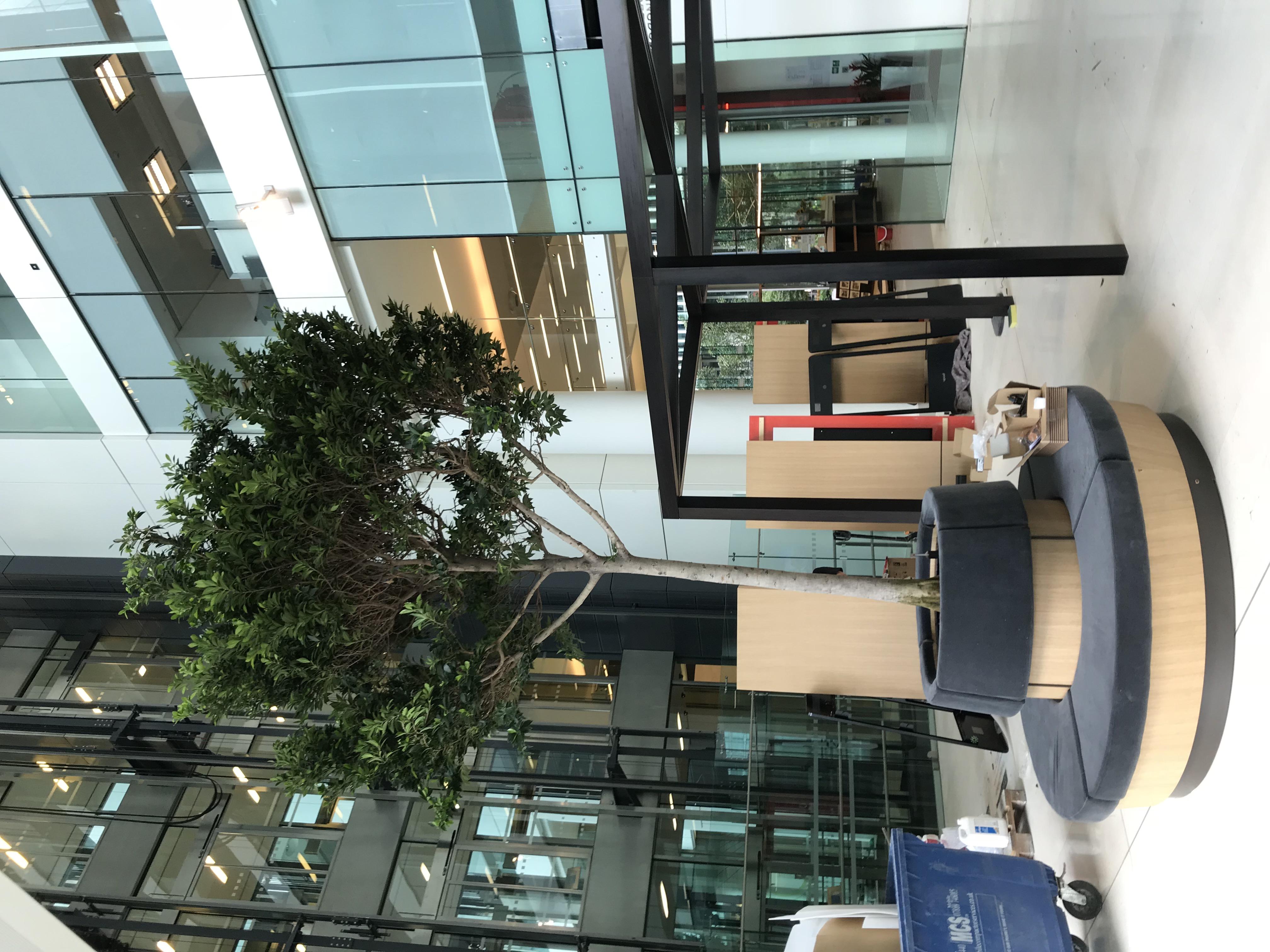 Atrium Planting London