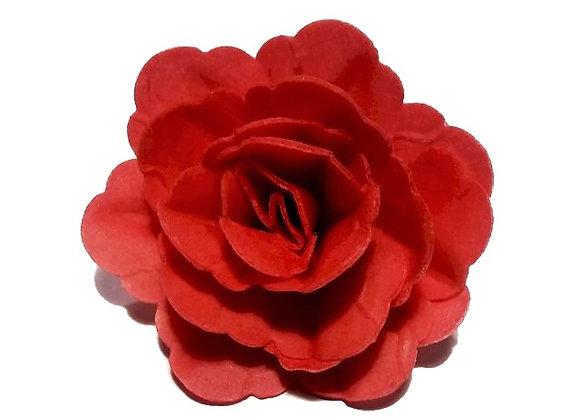 Sarkana ķīnas roze
