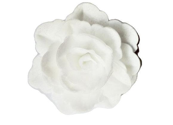 Balta ķīnas roze