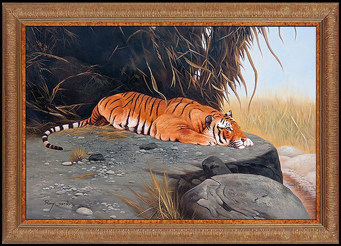 """""""Original Tiger at Rest"""" by Ray Jacob"""