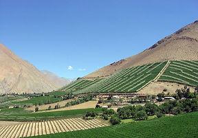 Valle Elqui, Cerros aridos con vides.jpg