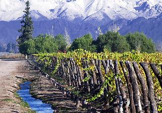 Maipo Valley Wine Tour Concha y Toro