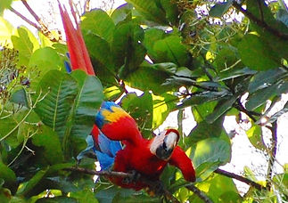 Costa Rica Private Tours. Limon and Puntarenas.