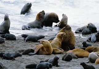 Peninsula Valdes Shore Excursion at Puerto Madryn