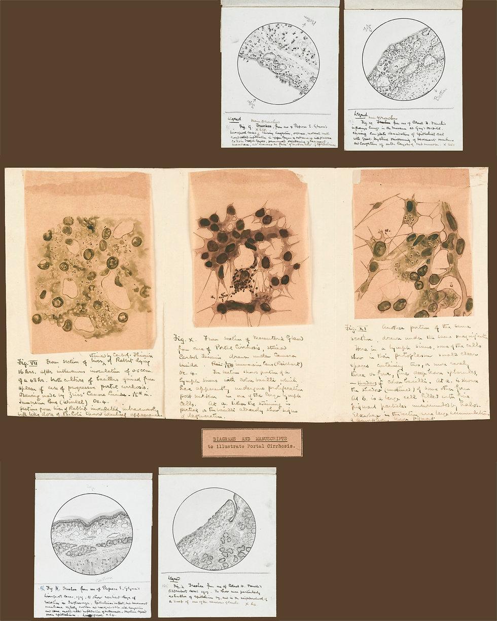 Flu-drawings3b.jpg