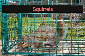 Squirrel Removal Central Florida