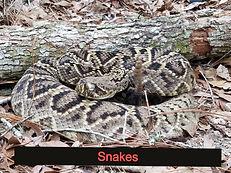 Snake Removal Central Florida