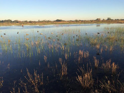 early teal 2014