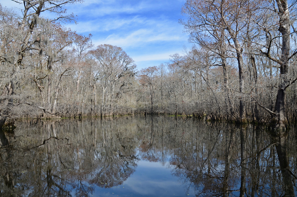 Reflections on the Waccamaw River near Conway, SC