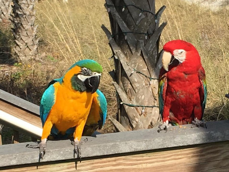 Pic of the Week: Pontificating Political Parrots