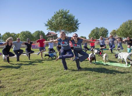 Goat Yoga? Really?