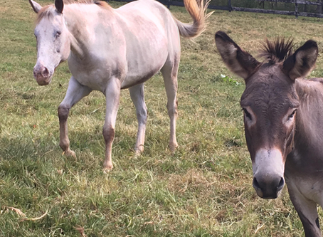Blind Horse, Seeing Eye Donkey, Rescued from Flood -- Good News for a Change