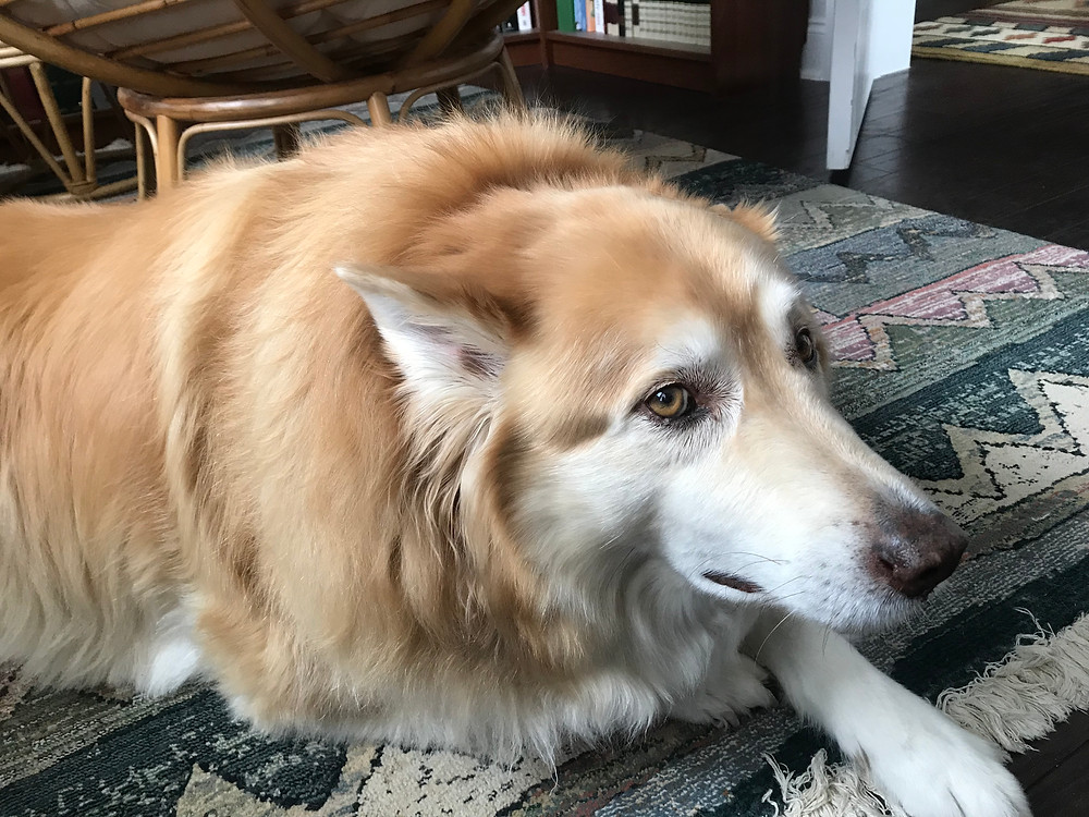 Sundance, my Red Husky, is saddened by what's going on in our country.