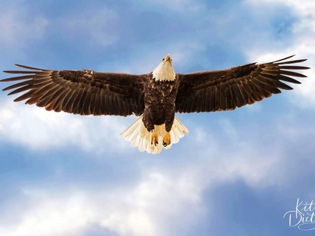 Pics of the Week: Eagle Claw Landing (Series)