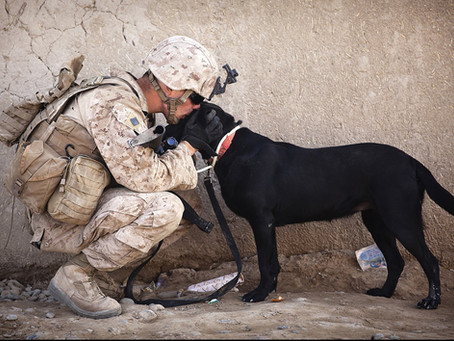 Support Providing Service Dogs to Vets with Conditions Like PTSD