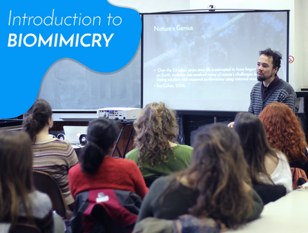 Workshops on Biomimicry - GLIMPS.bio
