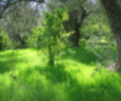 Lush green grass at the Hacienda for sale in the Granada Province, Andalucia