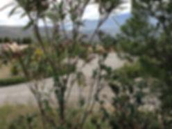 Bougainville at Hacienda for sale in the Granada Province, Andalucia