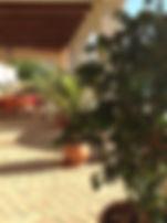 Hacienda for sale, terrace plants