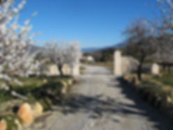 Gateway and road leading to the Hacienda for sale in the Granada Province, Andalucia