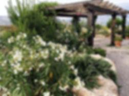 Pergola in the carpark of the Hacienda for sale in the Granada Province, Andalucia, Spain