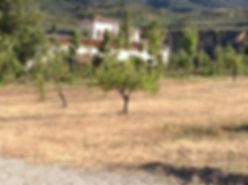 Across the finca to the Hacienda for sale in the Granada Province, Andalucia