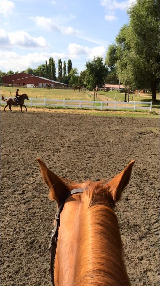 Travail extérieur cheval