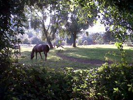Cheval au parc