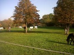 Parc de la pointe poney