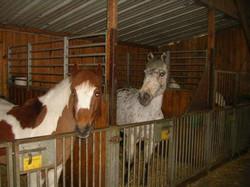 Écurie poneys