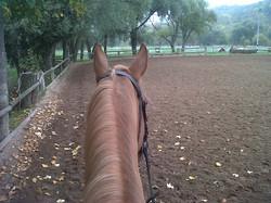 Carrière cheval