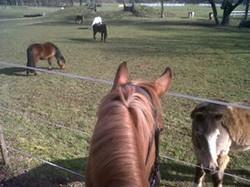 Cheval et poneys