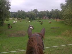 Parc poneys