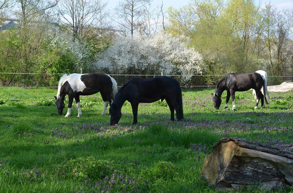 Biscaya, Abert et Chistu au parc