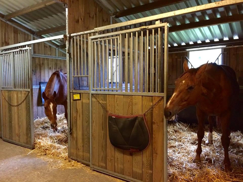 Ecurie chevaux
