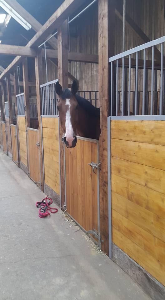 Écurie chevaux