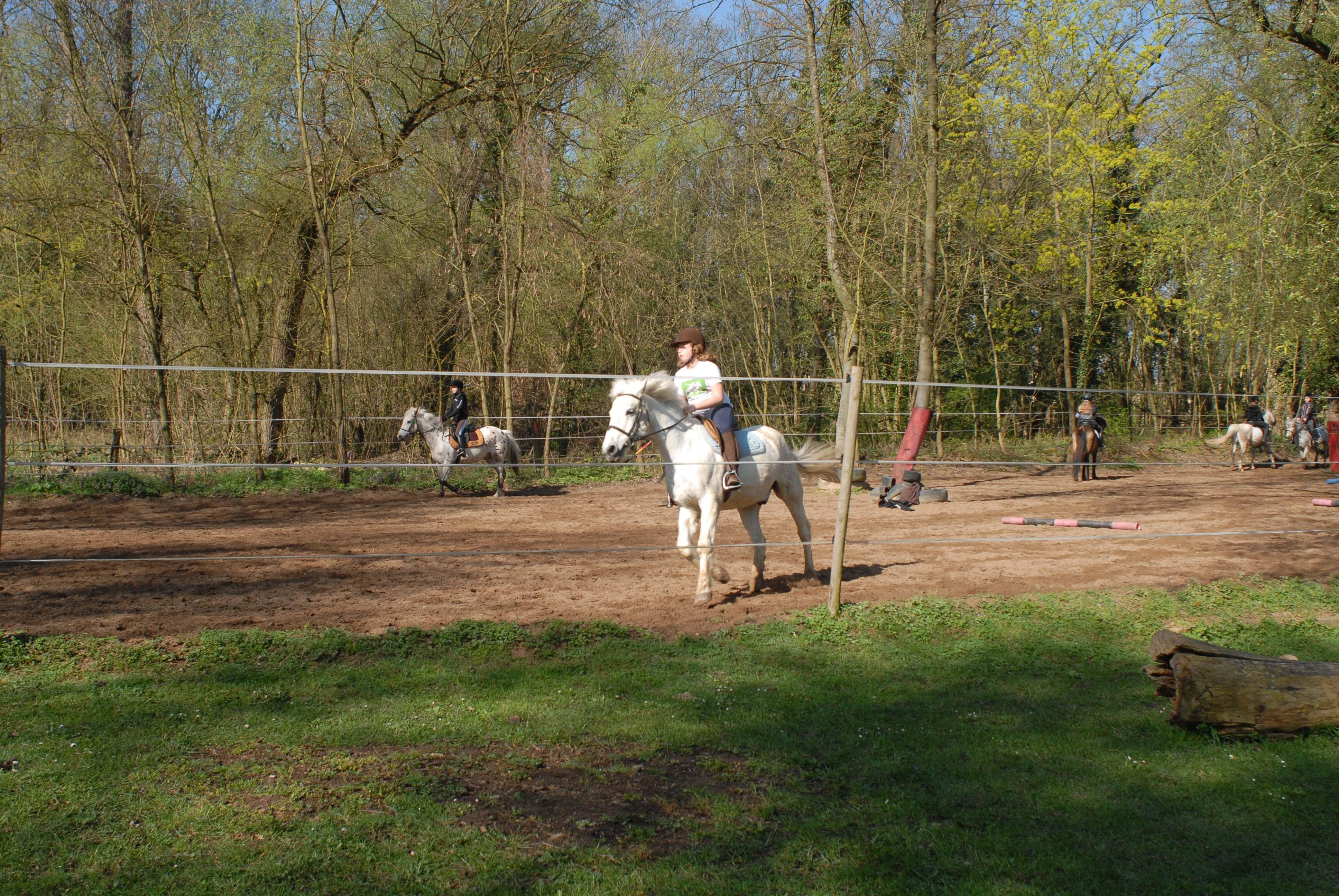 Cours poney carrière poney