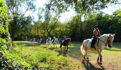 Promenade après les cours poneys