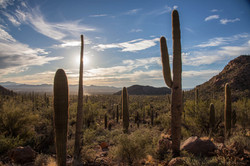 """Saguaro Nation"""