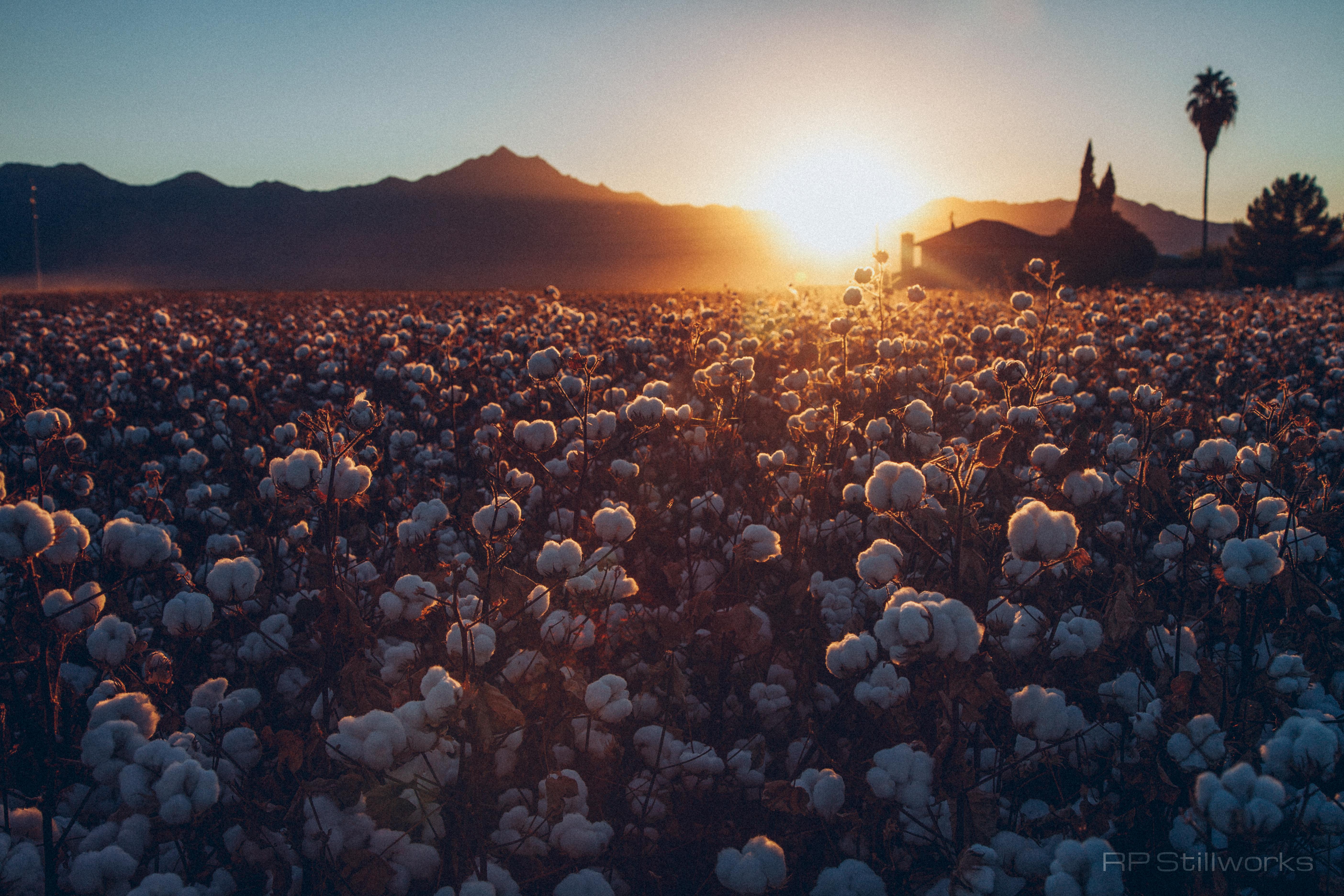 """100% Cotton"""