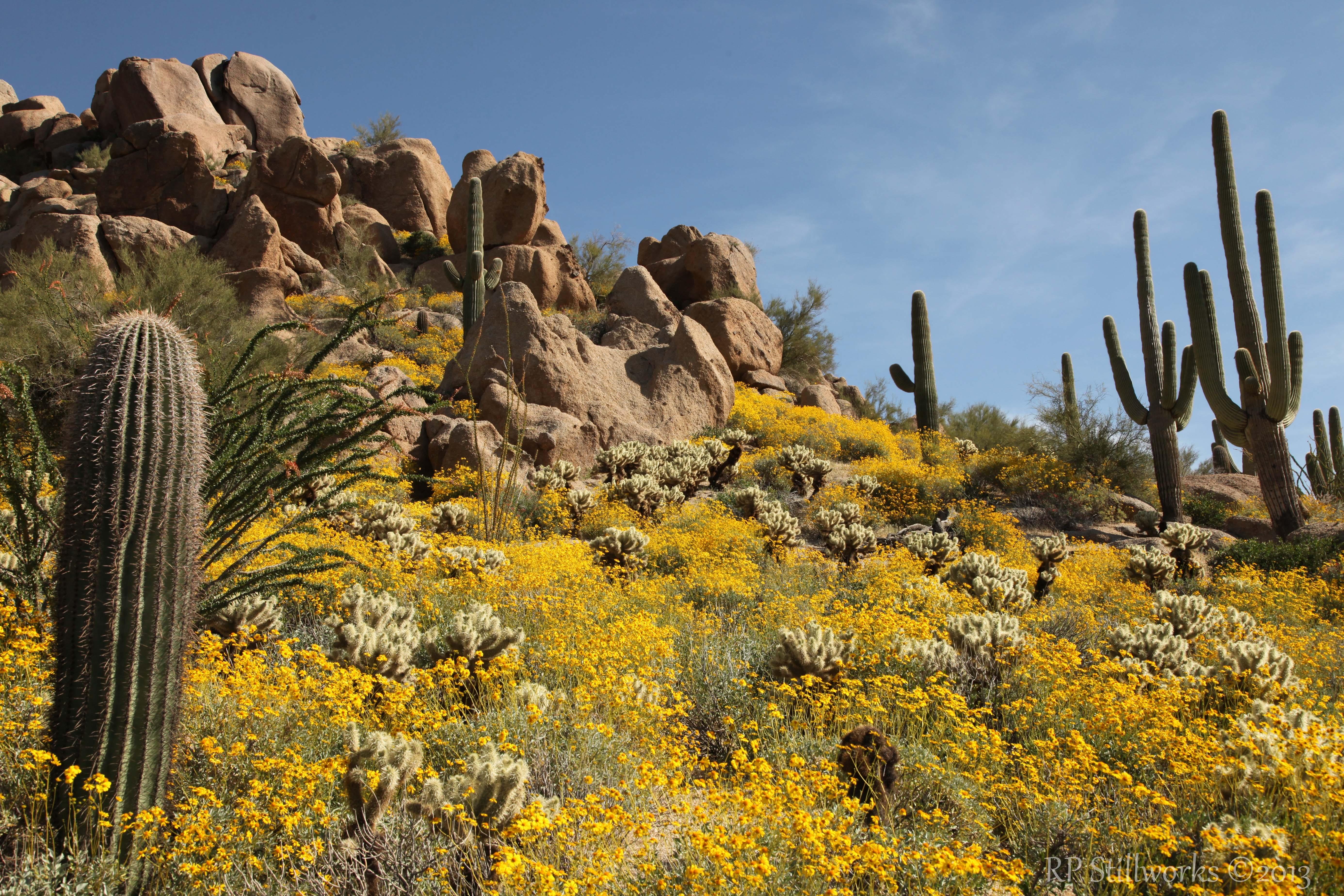 """""""Sonoran Spring"""""""