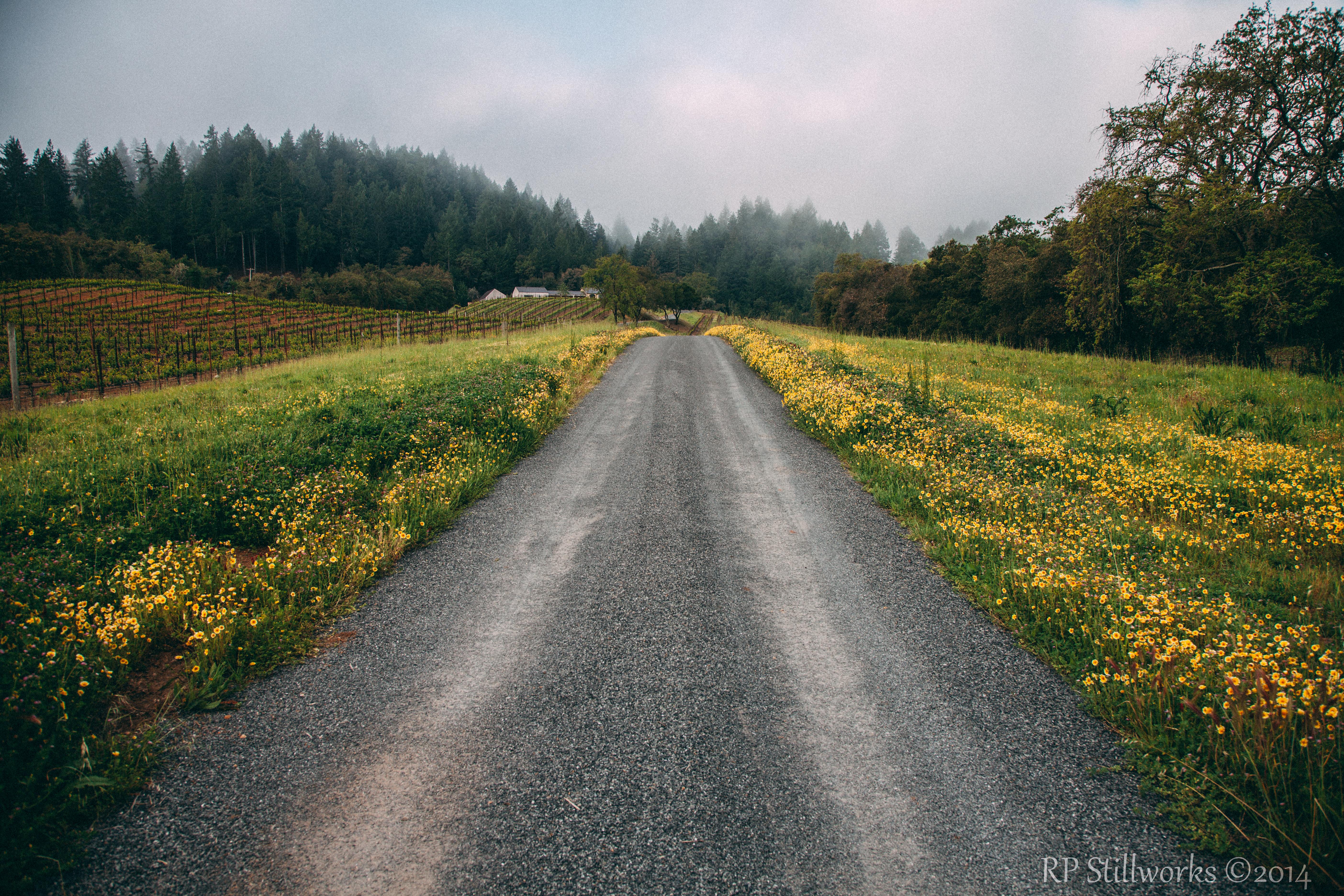 """Road Less Traveled"""