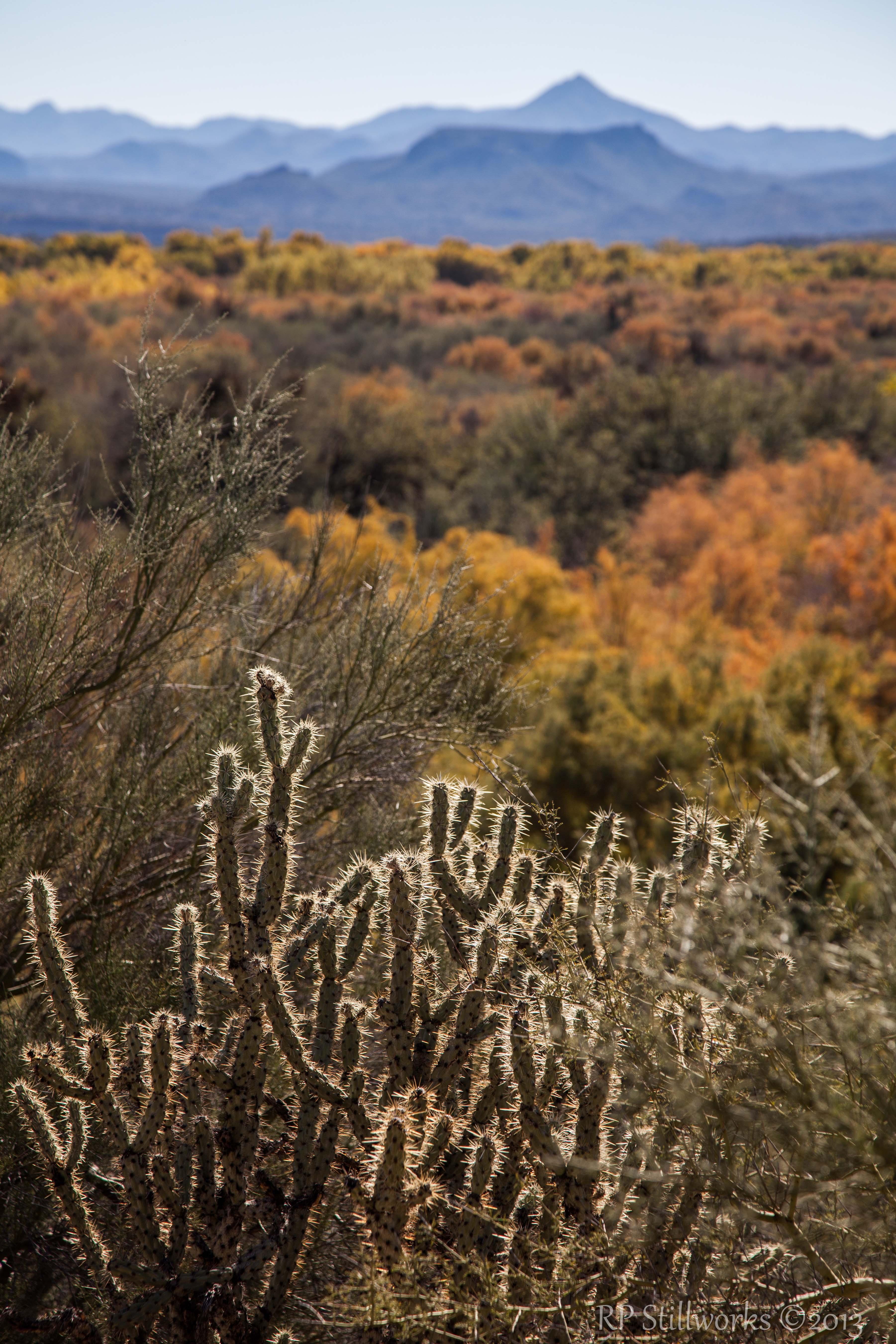 Fall in the Desert